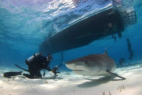 Shark Riders Pose Threat to Conservation Gains Made with Diving Ecotourism [Slide Show] | Marine Science and Conservation | Scoop.it