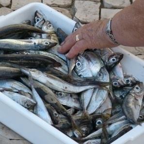 Sicurezza alimentare, linee guida in materia di igiene dei prodotti della pesca   Sicurezza alimentare   Scoop.it