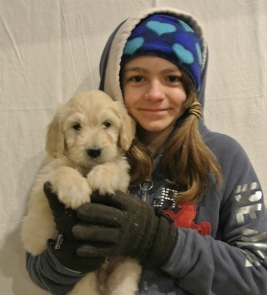 Puppies for Online sale in Massachusetts, USA | stepn stonefarm | Scoop.it
