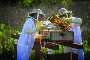 Minding the hive - CLU News | Cal Lutheran | Scoop.it