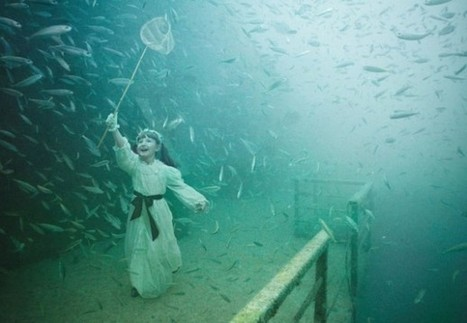 The Vandenberg, Life Below the Surface – Un projet de photographie aquatique hors du commun   Graphisme, visuels & Webdesign   Scoop.it