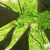 Denver Tree Pruning Removal Shrub Planting – Donovan Arborists