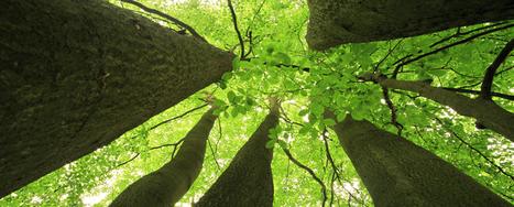Denver Tree Pruning Removal Shrub Planting – Donovan Arborists   Denver Tree Pruning Removal Shrub Planting – Donovan Arborists   Scoop.it