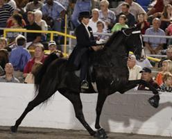Tennessee Walking Horse National Celebration ends, but not the controversy | Hoofcare and Lameness | Scoop.it