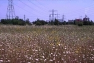 Edgelands: Unofficial countryside - Campaign to Protect Rural England | The Everyday | Scoop.it