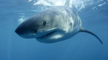 Australian diver survives 2nd shark attack | All about water, the oceans, environmental issues | Scoop.it