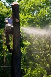 The needed tree removal by Franks Stump Grinding and Tree Service | Franks Stump Grinding and Tree Service | Scoop.it
