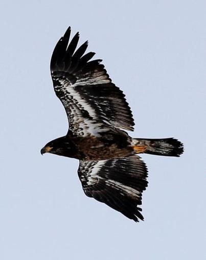 Birds Flock to Open Water Behind Ferries - Valley News | Reflejos | Scoop.it