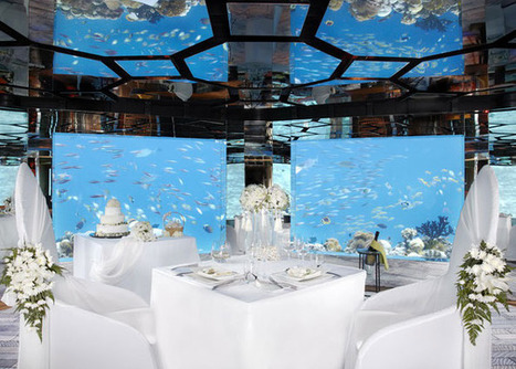 Underwater Dining – Eat among the fish!   Ornamental Aquatics   Scoop.it