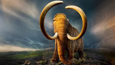 The Mammoth Cometh | #WildlifeWatch | Scoop.it
