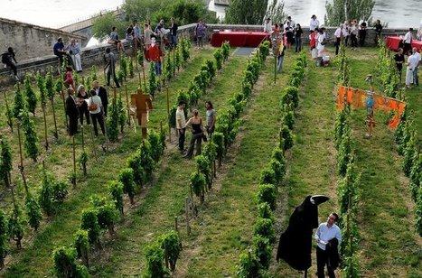 Avignon : les vignes vont refleurir au Palais des papes | tendances food | Scoop.it