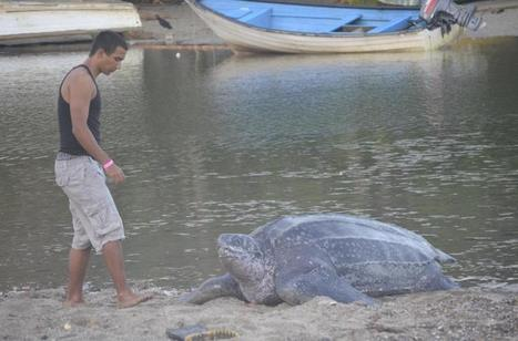 This teenager saved a stranded sea turtle's life   All about water, the oceans, environmental issues   Scoop.it