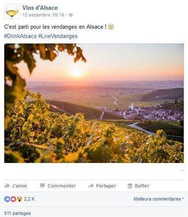 Les Vins d'Alsace lancent #LiveVendanges | Le vin quotidien | Scoop.it