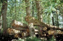 L'INRA et le laboratoire Dynafor de l'ENSAT veulent améliorer la commercialisation du bois | Agriculture et environnement | Scoop.it