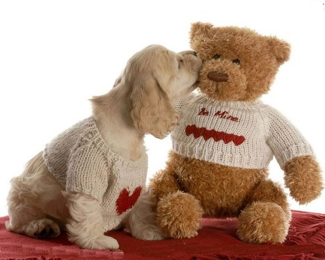 Happy Teddy Day 2015 Images, Pictures, Wallpapers, Pics and Photos   Soft Wallpapers   Scoop.it