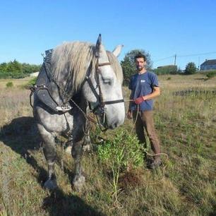 Les chevaux de trait luttent contre le baccharis - Ouest-France | Actu Equine en Pays de la Loire | Scoop.it
