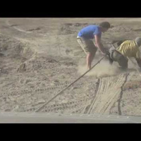 This Daring Baby Elephant Rescue Will Touch You | Share Some Love Today | Scoop.it
