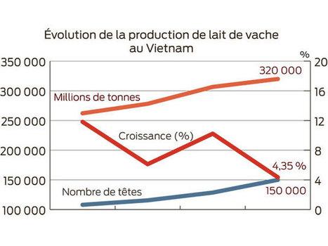 La production laitière à la peine au Vietnam - Paysan Breton | BTPL | Scoop.it