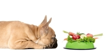 From Vegetarian to Venison: Why Your Pup Can't Partake of Your Politics | Website Tips | Scoop.it