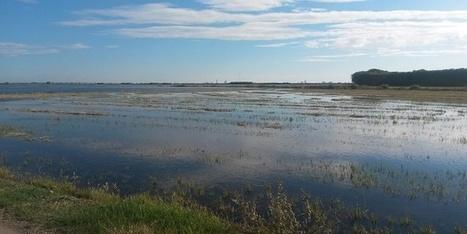 Life Sostrice: biogás a partir de la paja del arroz | Infraestructura Sostenible | Scoop.it