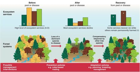 Science: The Consequence of Tree Pests and Diseases for Ecosystem Services | Science Education | Scoop.it
