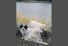 raymondmwilkins's Journal Entry: Beneficial tips dog training salt lake city | dog grooming utah | Scoop.it