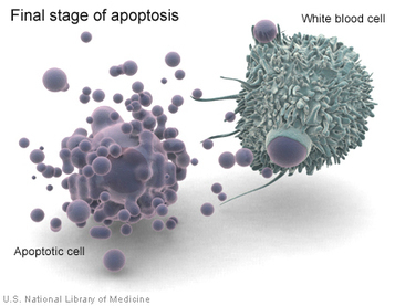 How Viruses Feign Death to Survive and Thrive | Amazing Science | Scoop.it