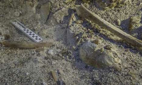 2,000-year-old skeleton found at Mediterranean shipwreck | News we like | Scoop.it