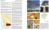 Eucalypts of WA's Wheatbelt Book | Australian Plants on the Web | Scoop.it