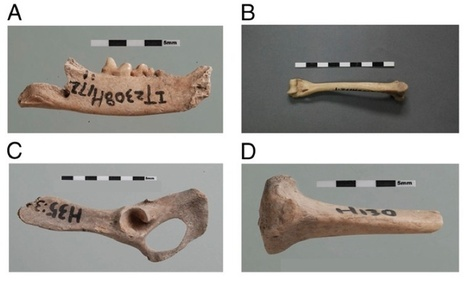 CHINE : Domestic Cats Enjoyed Village Life in China 5,300 Years Ago   World Neolithic   Scoop.it