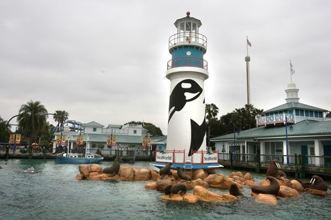 Pneumonia suspected in young dolphin's death at SeaWorld | All about water, the oceans, environmental issues | Scoop.it