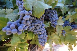 Missouri Wineries Cultivate EconomicGrowth | Winecations | Scoop.it