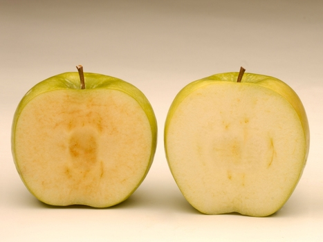 This GMO Apple Won't Brown. Will That Sour The Fruit's Image? - NPR (2014) | applied genomics | Scoop.it