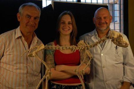 La Universidad de Murcia reconstruye el esqueleto de un perro con 4.000 años de antigüedad | historian: science and earth | Scoop.it
