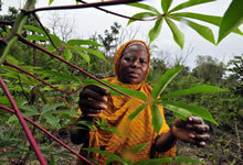 New Agriculturist: News brief - Multiple pest and disease outbreaks threaten cassava | Climate Change, Agriculture & Food Security | Scoop.it