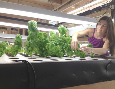 Company Brings Hydroponic Greens to Farmers Market | Vertical Farm - Food Factory | Scoop.it