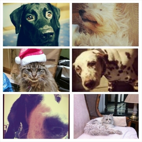 Cats and Dogs on Social Media | Social Media Today | News about Social Media | Scoop.it