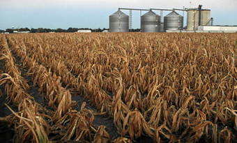 Kenya to have Maize Shortage in 2014 – Dial 254 - Kenyan News Online | Local Grain News | Scoop.it