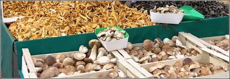 La véritable histoire du champignon de Paris   Actu Tourisme   Scoop.it