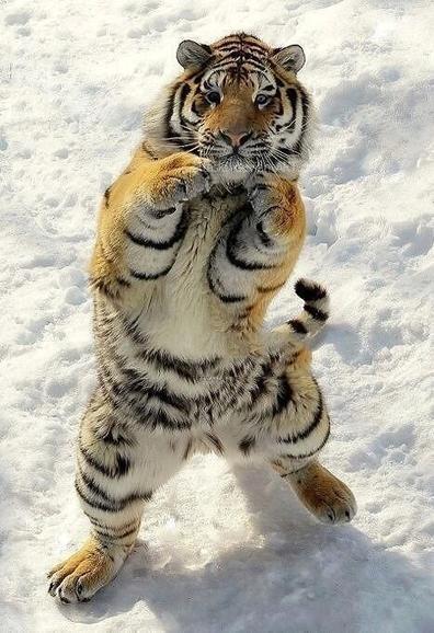 Tweet from @SWildlifepics | Boxing glory | Scoop.it