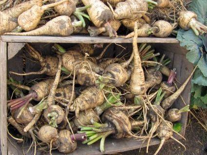 Conserver ses fruits et légumes tout l'hiver | planter des bulbes | Scoop.it