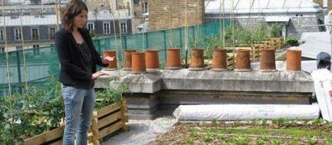 Des potagers fleurissent sur les toits de Paris | Socio-green | Scoop.it