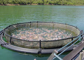 R$ 10 million allocated for shrimp farming in Piauí - Feed Machinery   Aquaculture (Global Aqua Link)   Scoop.it