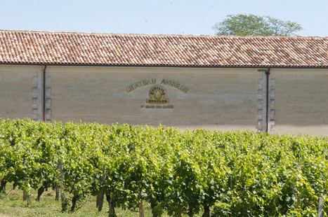 Le château Angelus ne l'emporte pas au paradis contre le livre Vino Business | Le Vin en Grand - Vivez en Grand ! www.vinengrand.com | Scoop.it