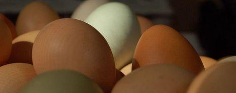 "Review of ""Eat the Yolks"" by Liz Wolfe | Paleo f(x)™ | UrbanCaveNews | Scoop.it"