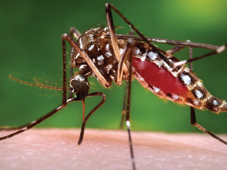 Malaria 'master switch' discovered | DAWNS Digest | Scoop.it