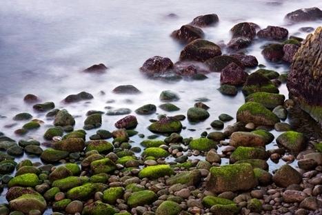 Algas verdes que brillan en la oscuridad   Vale la pena Ver o Leer.   Scoop.it