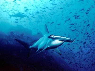 Big win for sharks: European Union bans all shark finning ... | Shark Attacks | Scoop.it