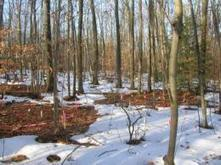 Warmer soils release additional CO2 into atmosphere; Effect stabilizes over longer term | Sustain Our Earth | Scoop.it