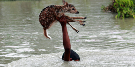 Courageous Teen Risks His Life To Save Drowning Baby Deer | Sociedad 3.0 | Scoop.it